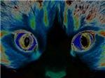 Solarized Eyes
