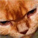 Oil Image #6655 British Shorthair Cats Eyes