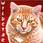 Wildstar the Cat