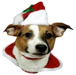 JRT Holiday: Christmas Santa Paws