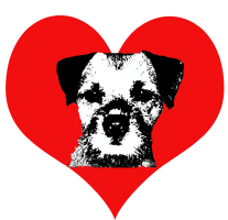 Happy Valentine's Day, Border Terrier Style!
