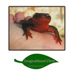 Rough Skinned Newt Salamander
