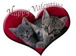 Happy Kitty Valentine