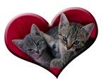 Love Kittens