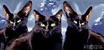 Black Cats in the Clouds Stuff