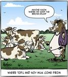 Tofu Cow