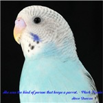Parakeet 3 Steve Duncan