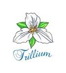 TRILLIUM FLOWER TRI...