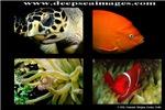 Underwater Medley
