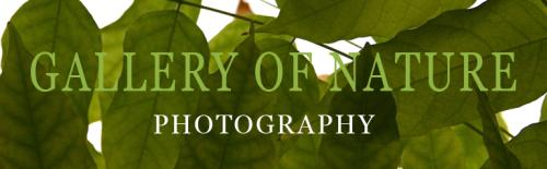 GALLERY OF NATURE & ENVIRONMENT
