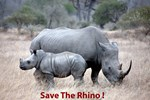 Save The Rhino !