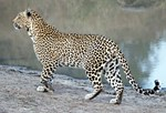 Karula On The Move