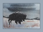 Snowdusted Bison