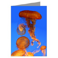 JellyFish Nature Photography Greeting Cards