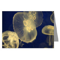 jellyfish photography as art greeting cards