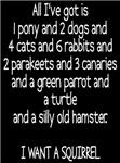 I want a Squirrel 1