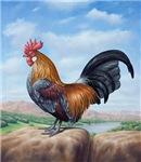 Cockerel 3