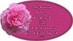 Psalm 19:1 Pink Peony