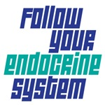 follow your endocrine system