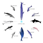 Dolphin and Whale Clocks