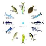 So Cal Sportfishing Clock 1