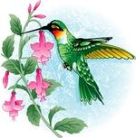FUCIA HUMMINGBIRD