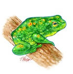 Treefrog
