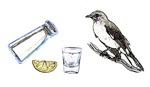 Picture Pun - Tequilla Mockingbird