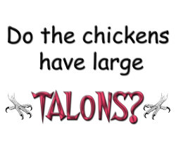 DO THE CHICKENS HAVE LARGE TALONS T SHIRT