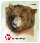 Arthur the Bear