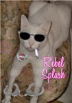 Rebel Splash