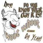 Hump Day Oh Yeah  Camel