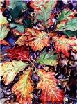 Fall Saplings
