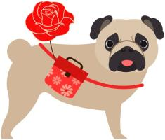Valentine Pug With Rose