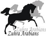 Zuhra Arabians
