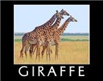 Giraffe Calendars