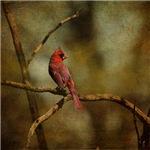 Cardinal III