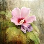 Romantic Hibiscus Flower