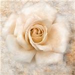 Vintage Rose V