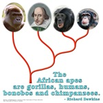 African Apes
