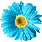 Pop Art Blue Daisy T-shirts & Gifts