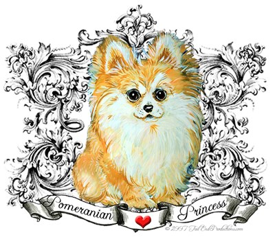 Pomeranian  - Toy Dog!