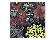 Lichens I