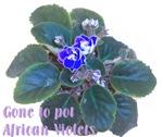 Gone to Pot African Violets