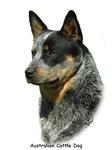 Australian Cattle Dog 9F061D-06