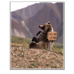 Bear Note Cards, Prints, and Posters