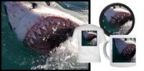 Gaping Jaws Great White Shark