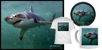Underwater Great White Shark - Africa