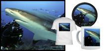 Reef Shark & Diver