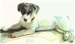 B'mer Puppy